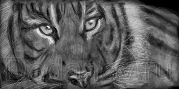 граффити тигр на стену в контакте