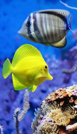 Музей-аквариум в Севастополе