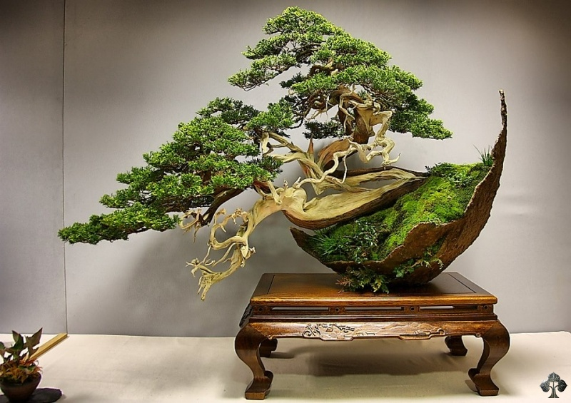 bonsai-luis-vila-salvador