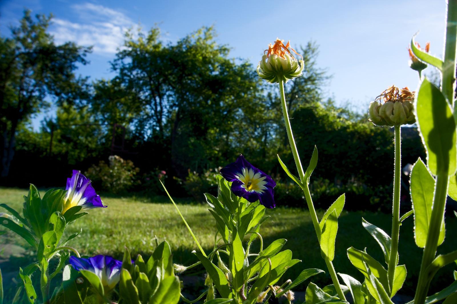 Летнее доброе утро на природе (фото)
