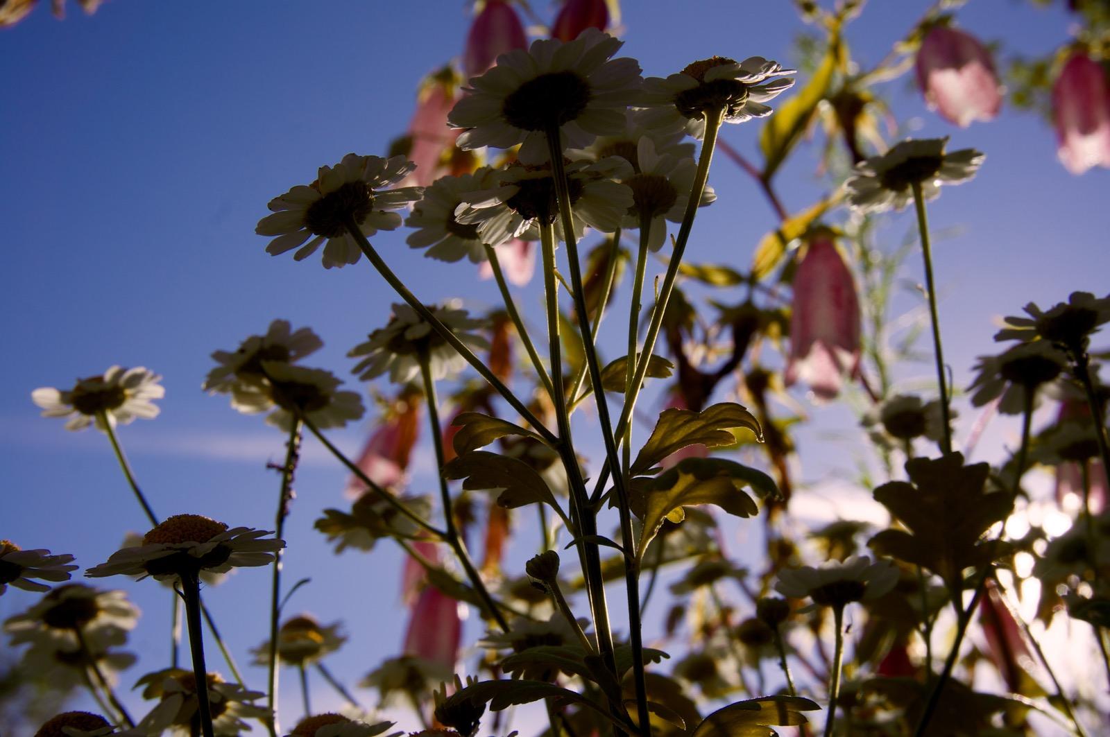 доброе утро на природе (фото)