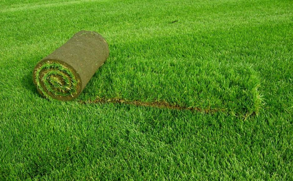 Теневыносливый газон — состав трав, виды газонов и выбор
