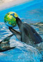 Севастопольский дельфинарий — лечение дельфинами